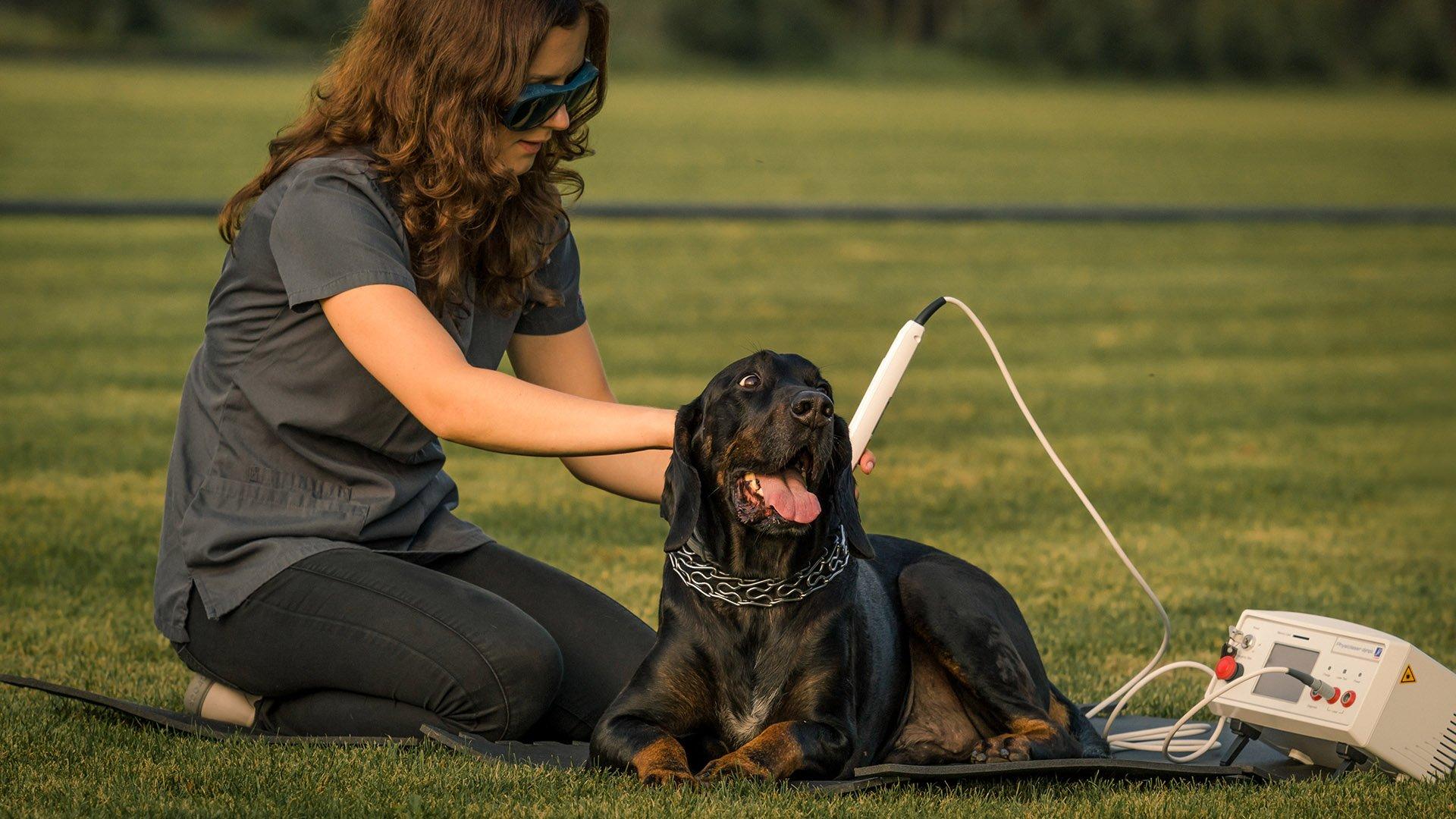 laseroterapia psa laser dla psa warszawa